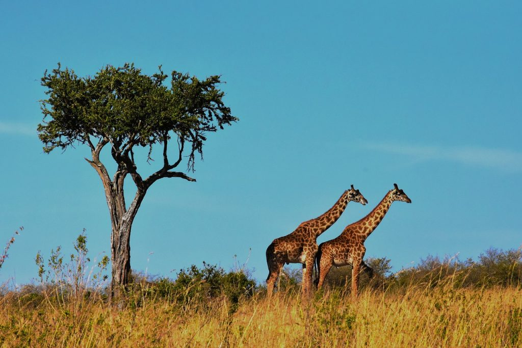 Le parc national Serengeti en Tanzanie